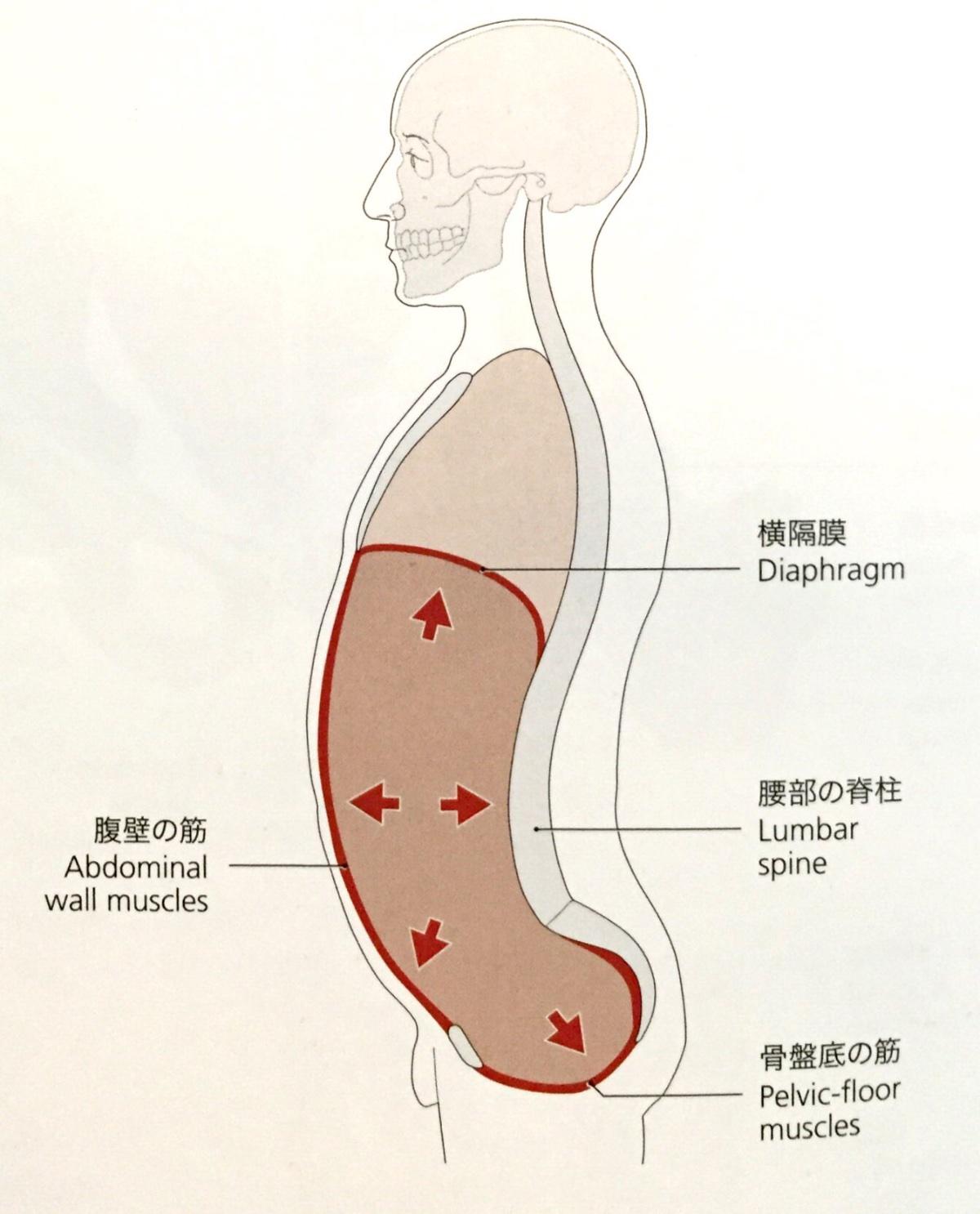 「腹圧」の画像検索結果