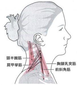 肩こり 頸部 位置関係 1