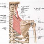 肩こりには肩甲骨の運動が必要!?~菱形筋と肩甲骨~