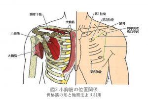 図3 小胸筋の位置関係