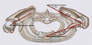肩甲骨と胸郭