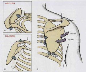 肩甲骨の動き2