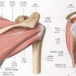 肩こりと関係する疾患~腱板断裂とは?~