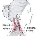 肩こりを防ぐ首の位置を保つ筋肉!!~ひそかに作用する頭・頸長筋~