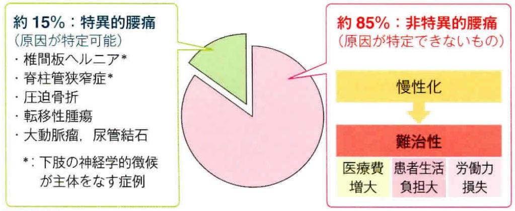 腰痛の分類