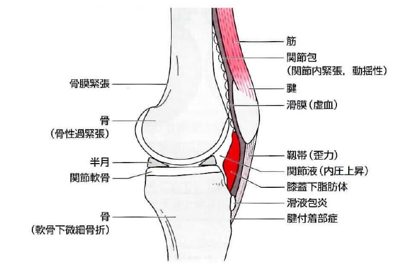 膝の痛みについて知っていますか?