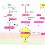 2ヵ月ダイエットのコツ【ダイエット成功へのカギ!~ビタミンとダイエットの関係~】