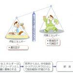 2ヵ月ダイエットのコツ【必見!ダイエット中の食事のポイント~○○に注意しましょう!~】