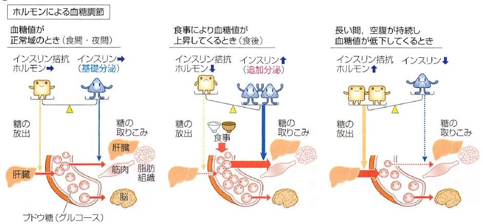 血糖の調節