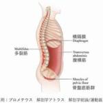 体幹筋と腹圧の関係